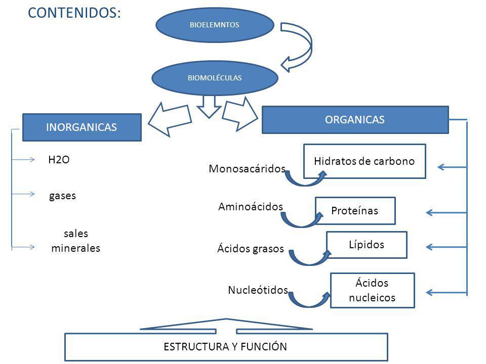 CONTENIDOS: ORGANICAS INORGANICAS Hidratos de carbono H2O