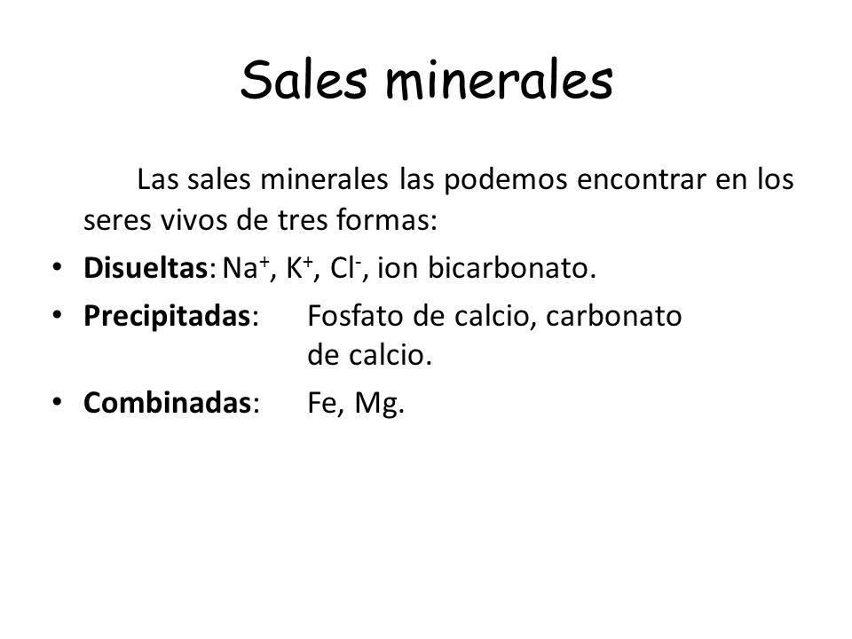 Sales minerales Las sales minerales las podemos encontrar en los seres vivos de tres formas: Disueltas: Na+, K+, Cl-, ion bicarbonato.