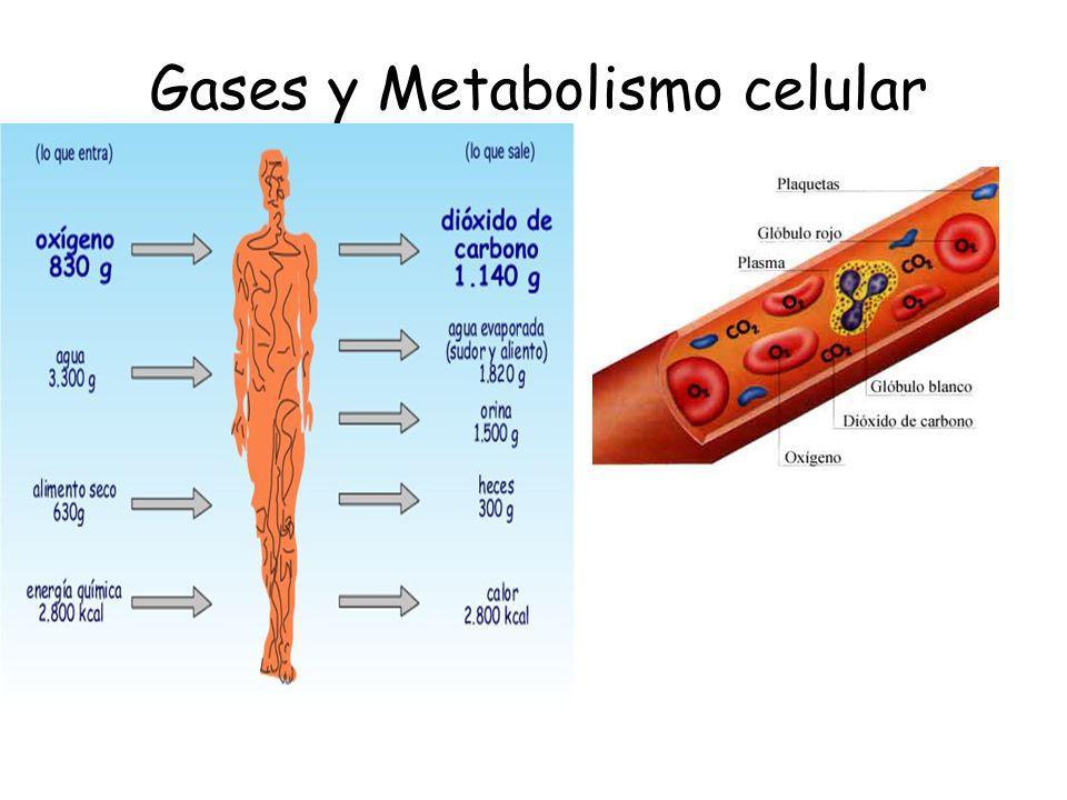 Gases y Metabolismo celular