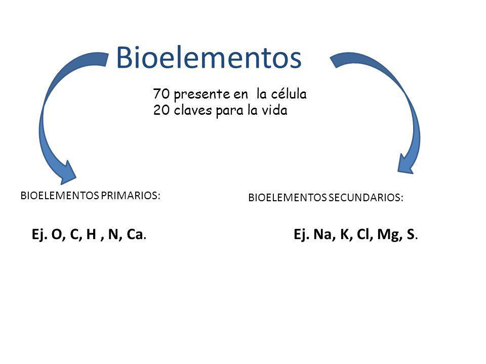 Bioelementos Ej. O, C, H , N, Ca. Ej. Na, K, Cl, Mg, S.