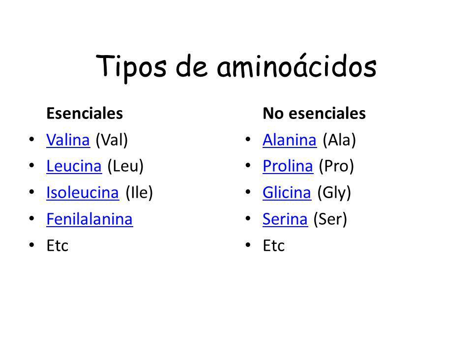 Tipos de aminoácidos Esenciales Valina (Val) Leucina (Leu)