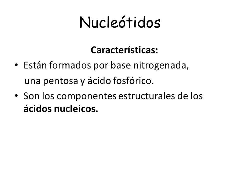 Nucleótidos Características: Están formados por base nitrogenada,