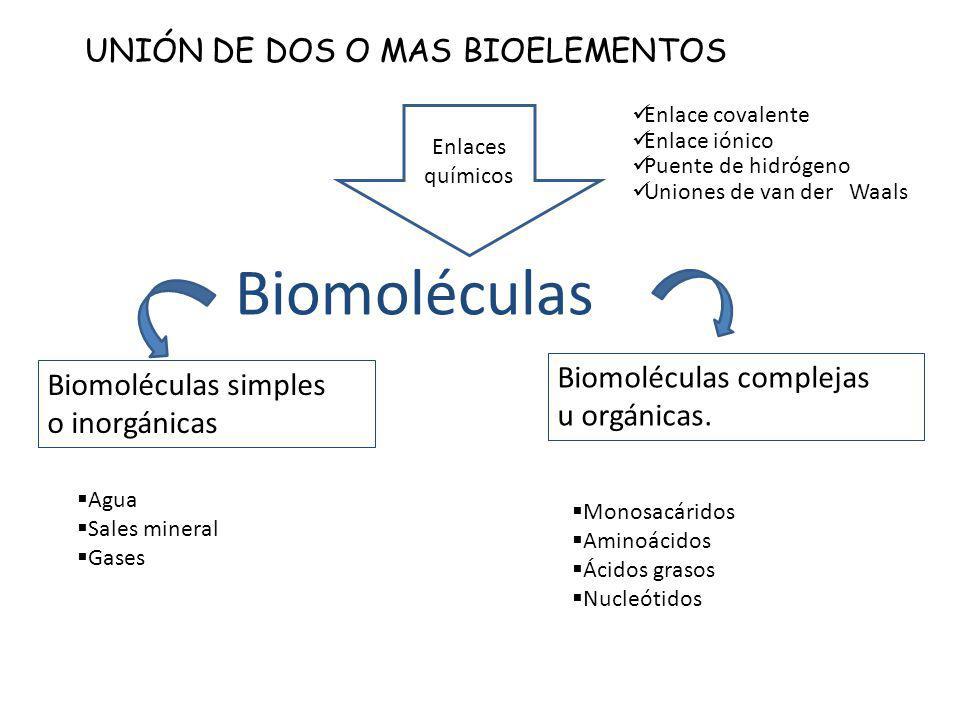 Biomoléculas UNIÓN DE DOS O MAS BIOELEMENTOS Biomoléculas complejas