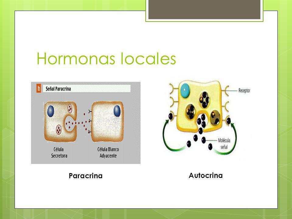 Hormonas locales Paracrina Autocrina