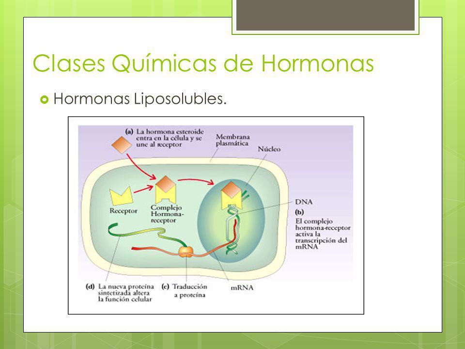 Clases Químicas de Hormonas