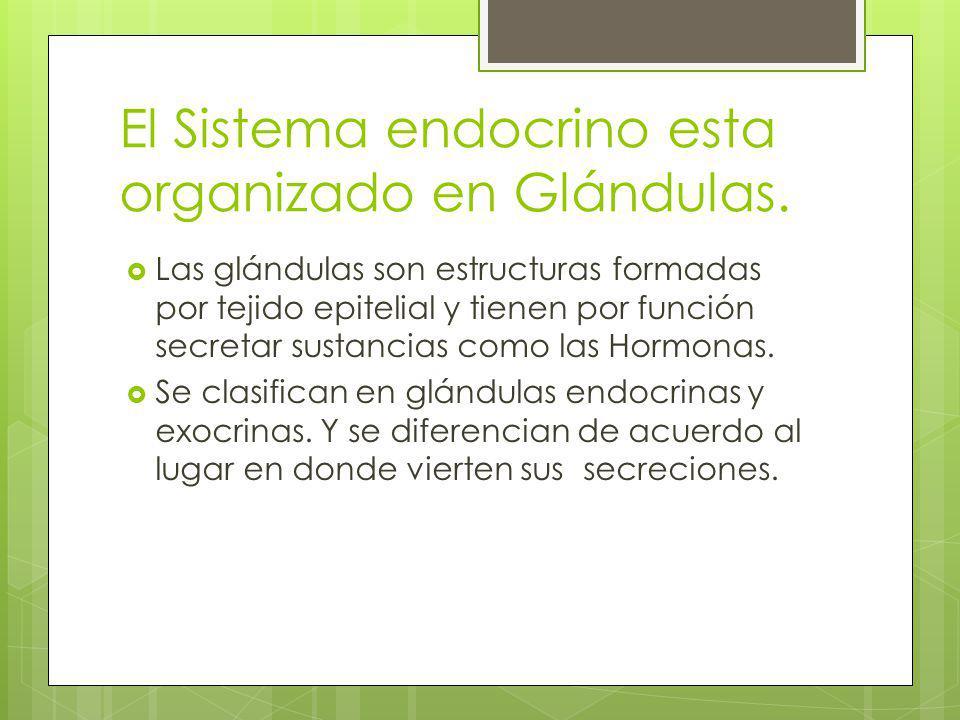 El Sistema endocrino esta organizado en Glándulas.