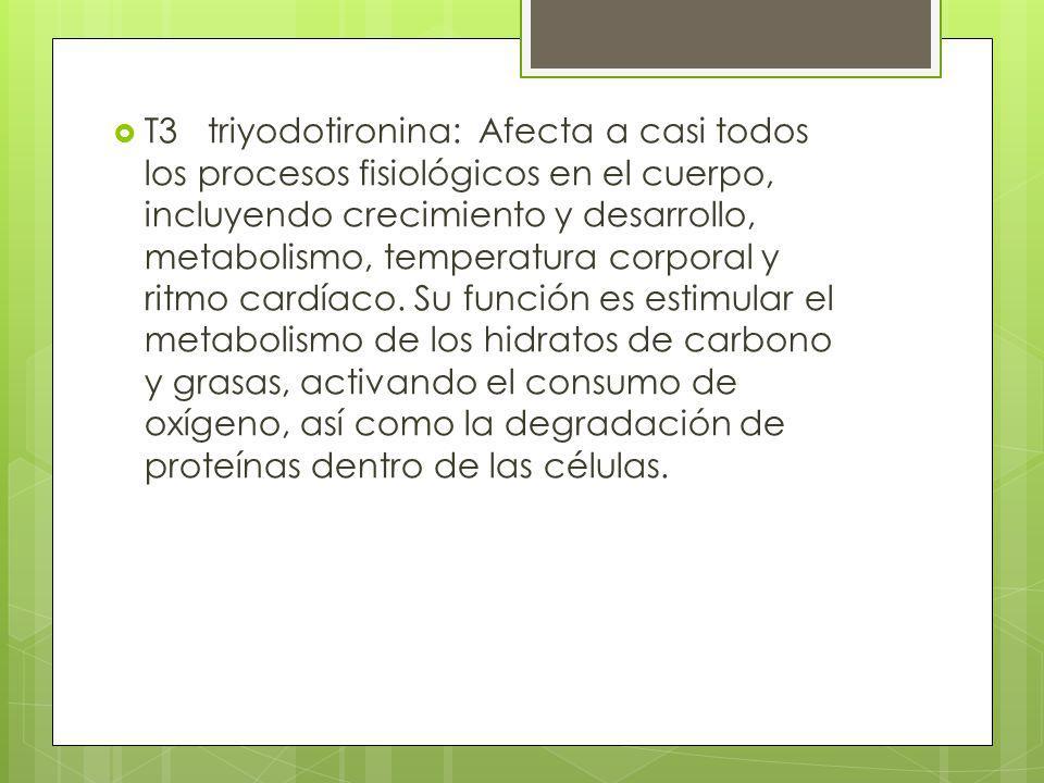 T3 triyodotironina: Afecta a casi todos los procesos fisiológicos en el cuerpo, incluyendo crecimiento y desarrollo, metabolismo, temperatura corporal y ritmo cardíaco.