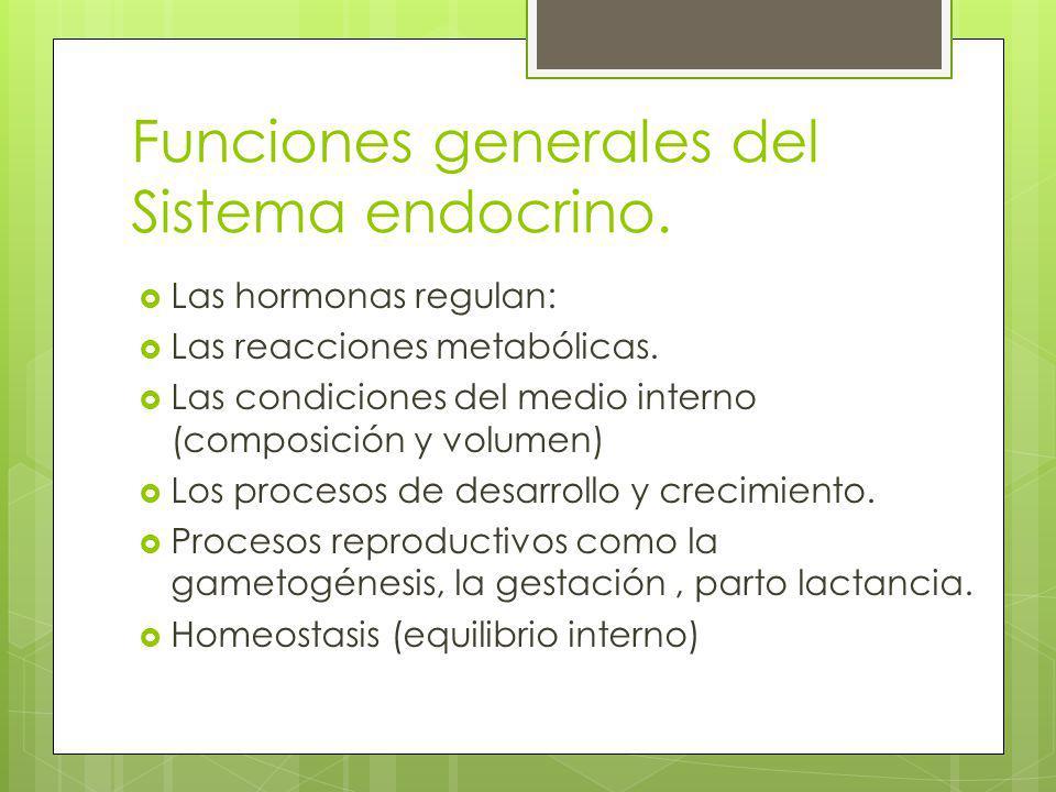 Funciones generales del Sistema endocrino.