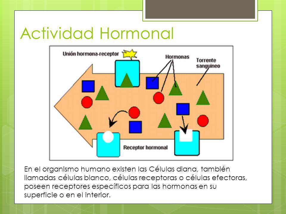 Actividad Hormonal