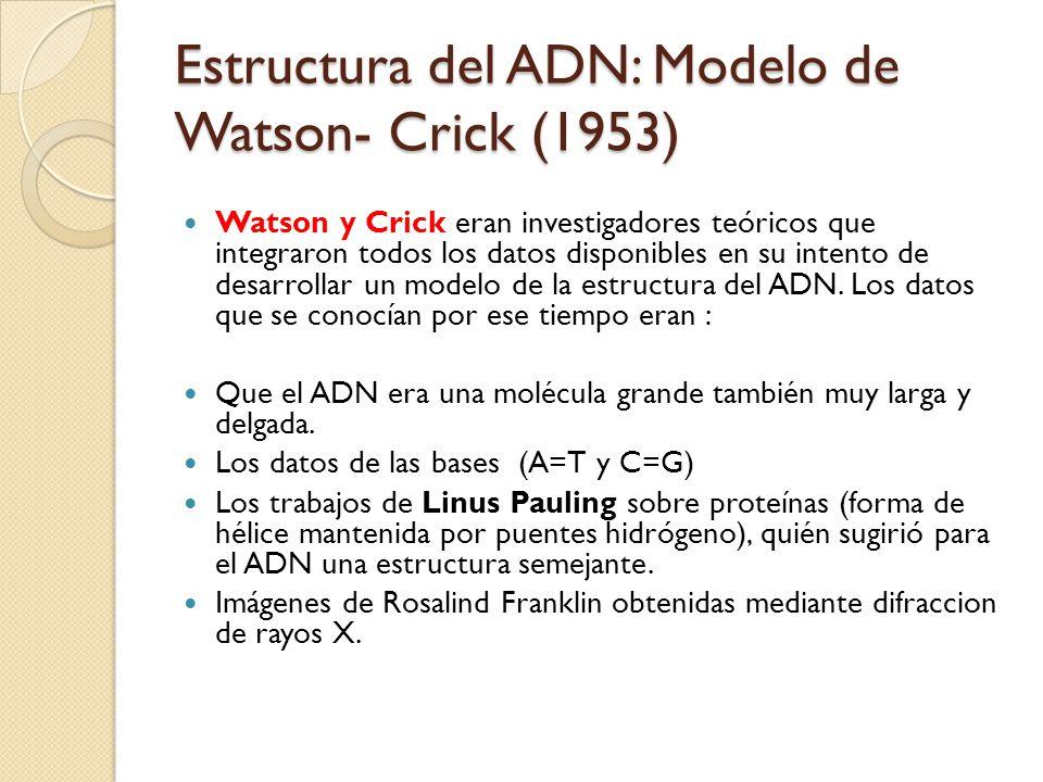 Estructura del ADN: Modelo de Watson- Crick (1953)