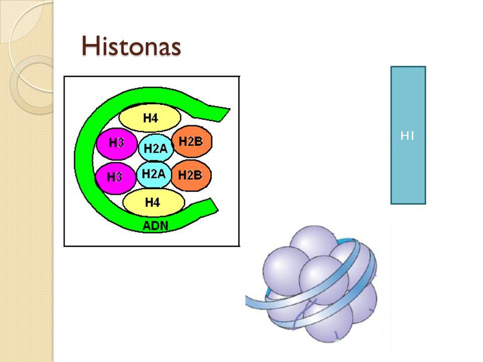 Histonas H1