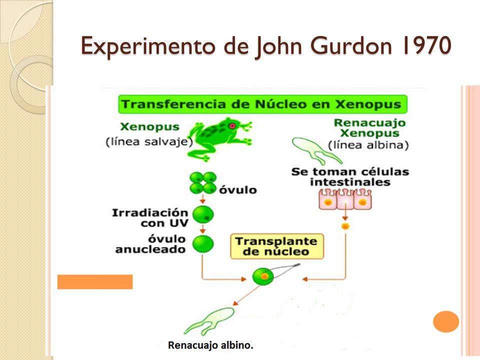 Experimento de John Gurdon 1970