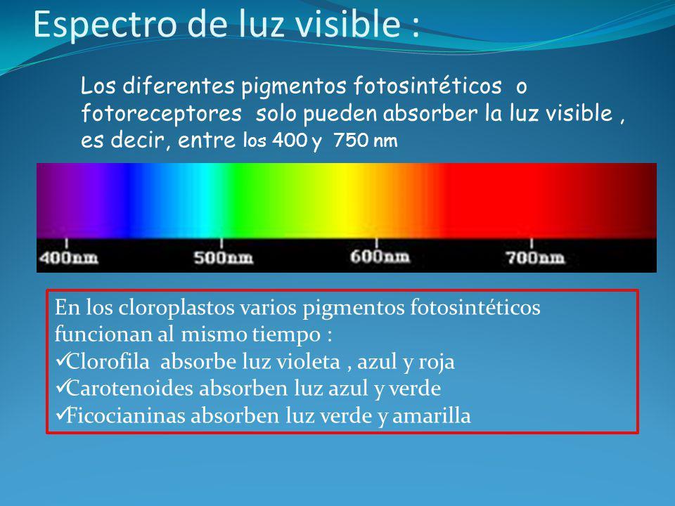 Espectro de luz visible :