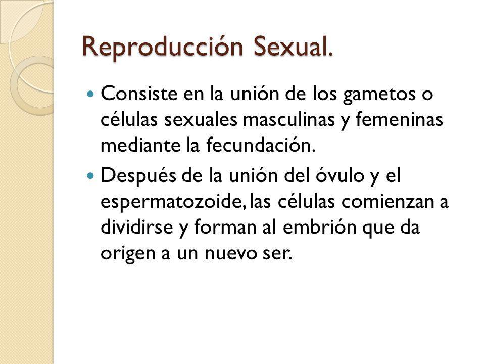 Reproducción Sexual. Consiste en la unión de los gametos o células sexuales masculinas y femeninas mediante la fecundación.