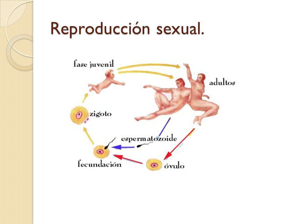 Reproducción sexual.