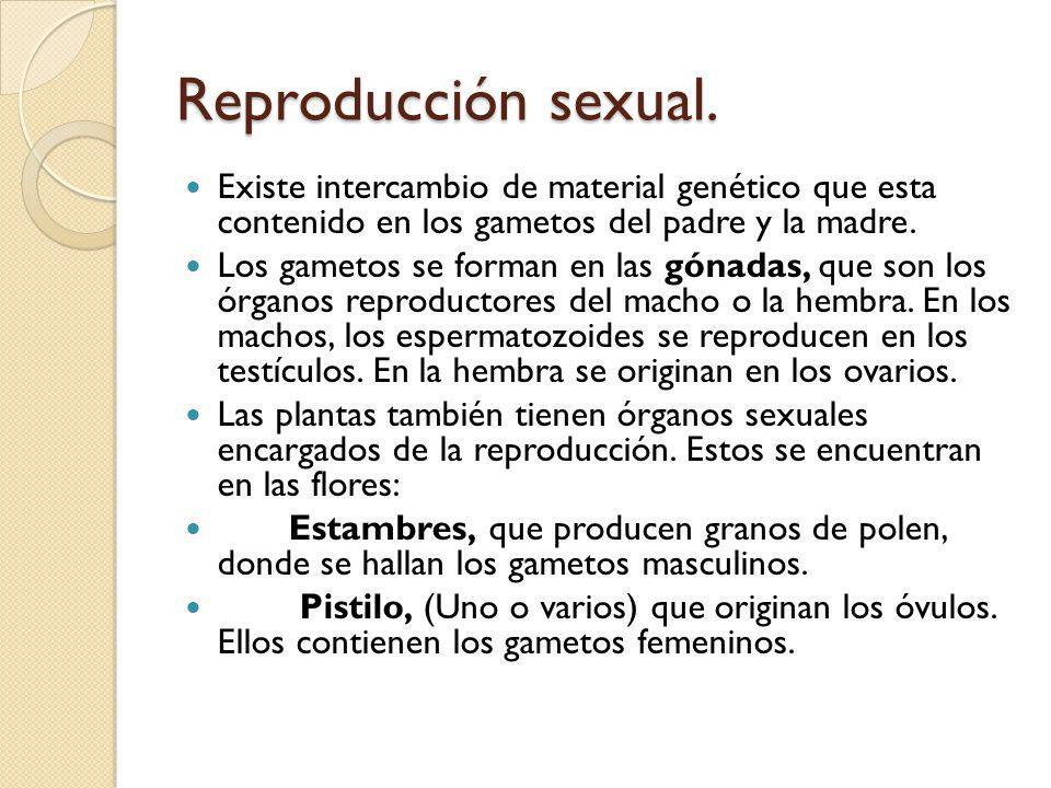 Reproducción sexual. Existe intercambio de material genético que esta contenido en los gametos del padre y la madre.