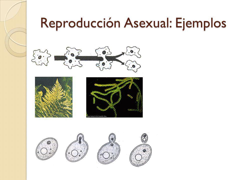 Reproducción Asexual: Ejemplos
