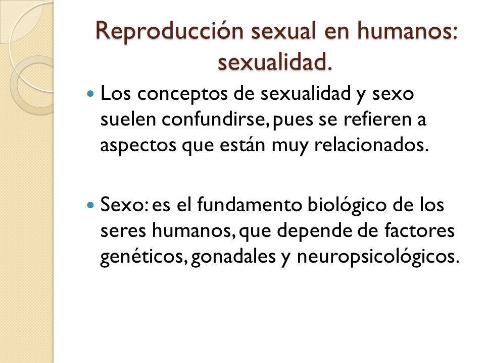 Reproducción sexual en humanos: sexualidad.