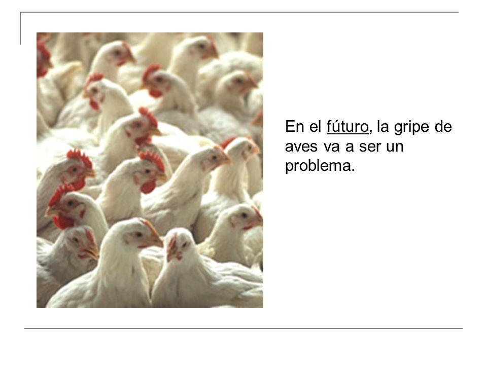 En el fúturo, la gripe de aves va a ser un problema.