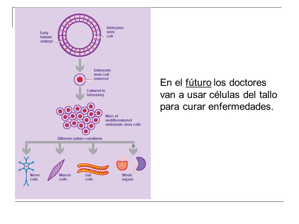 En el fúturo los doctores van a usar células del tallo para curar enfermedades.