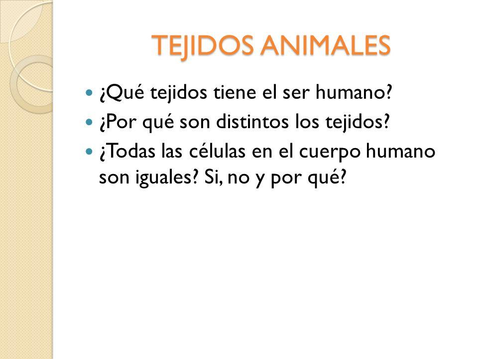 TEJIDOS ANIMALES ¿Qué tejidos tiene el ser humano