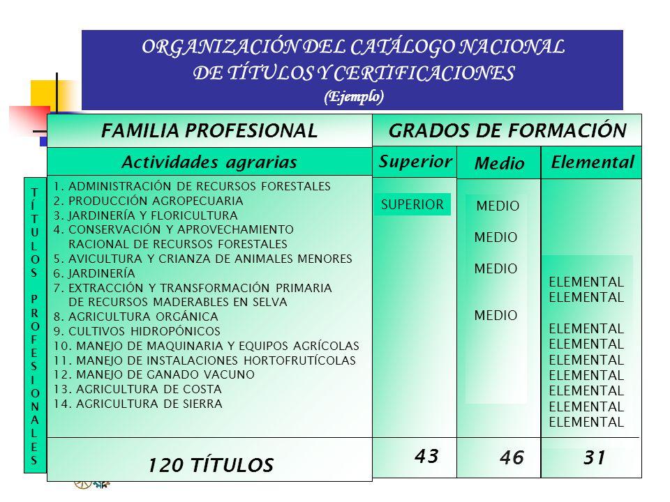 ORGANIZACIÓN DEL CATÁLOGO NACIONAL DE TÍTULOS Y CERTIFICACIONES