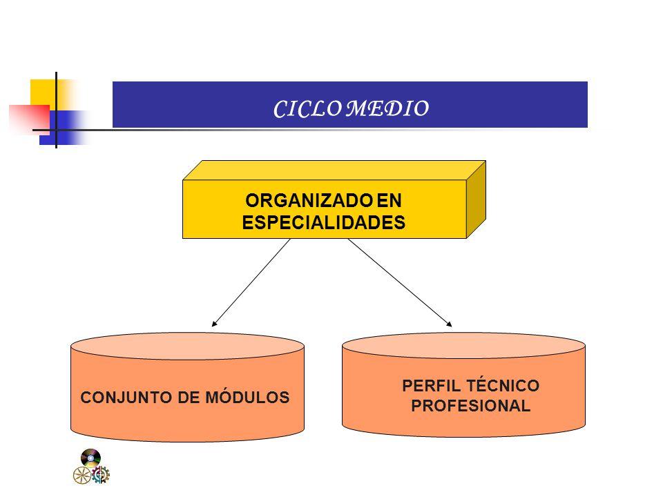 ORGANIZADO EN ESPECIALIDADES PERFIL TÉCNICO PROFESIONAL