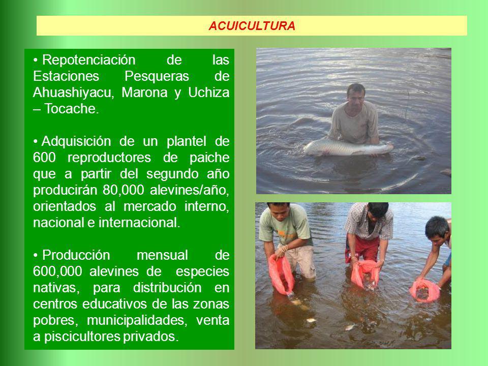 ACUICULTURA Repotenciación de las Estaciones Pesqueras de Ahuashiyacu, Marona y Uchiza – Tocache.