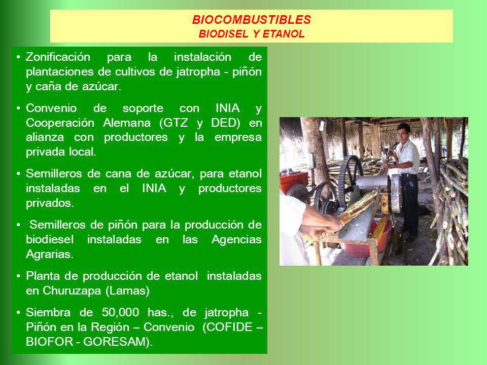 Planta de producción de etanol instaladas en Churuzapa (Lamas)
