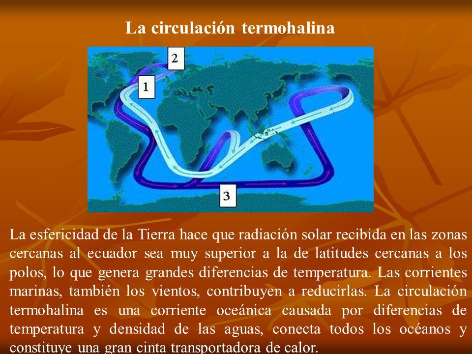 La circulación termohalina