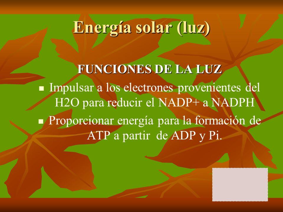 Proporcionar energía para la formación de ATP a partir de ADP y Pi.