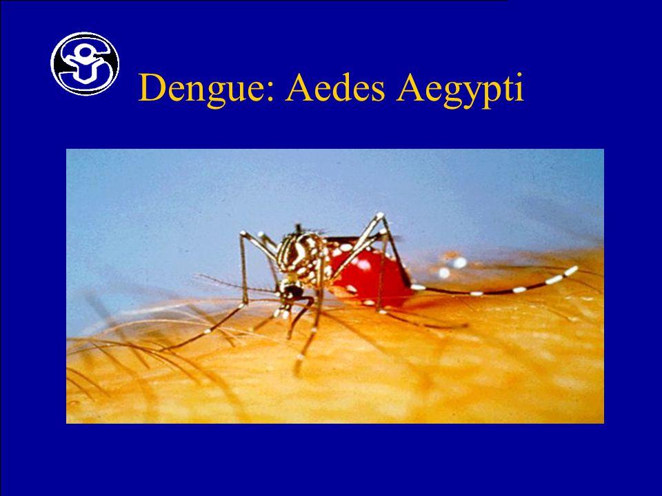 Dengue: Aedes Aegypti