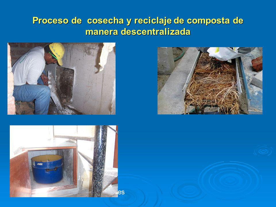 Proceso de cosecha y reciclaje de composta de manera descentralizada