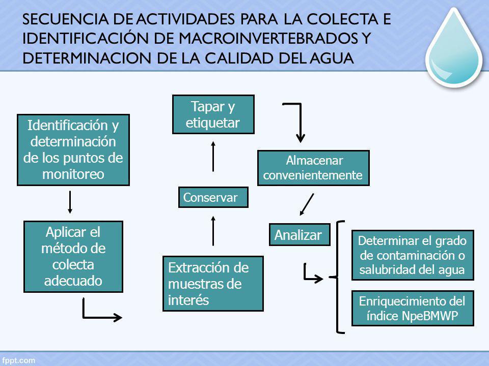 SECUENCIA DE ACTIVIDADES PARA LA COLECTA E IDENTIFICACIÓN DE MACROINVERTEBRADOS Y DETERMINACION DE LA CALIDAD DEL AGUA
