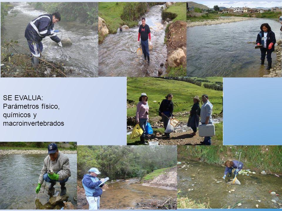 SE EVALUA: Parámetros físico, químicos y macroinvertebrados