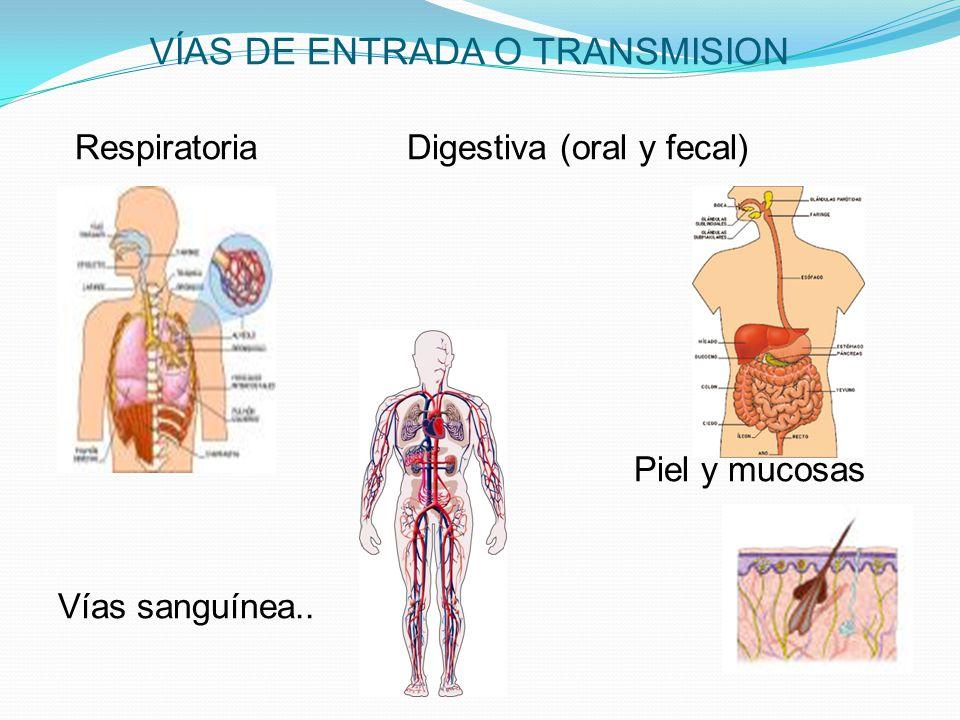 VÍAS DE ENTRADA O TRANSMISION