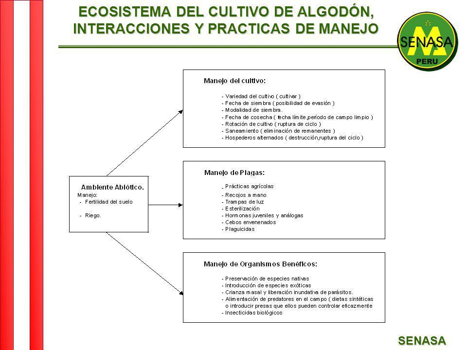ECOSISTEMA DEL CULTIVO DE ALGODÓN, INTERACCIONES Y PRACTICAS DE MANEJO
