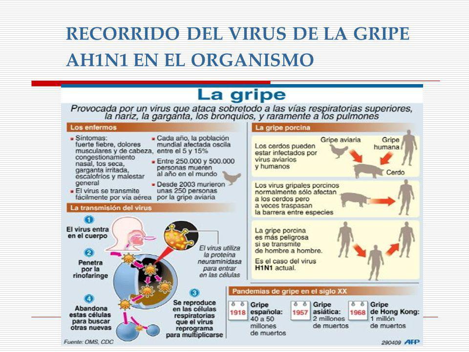 RECORRIDO DEL VIRUS DE LA GRIPE AH1N1 EN EL ORGANISMO