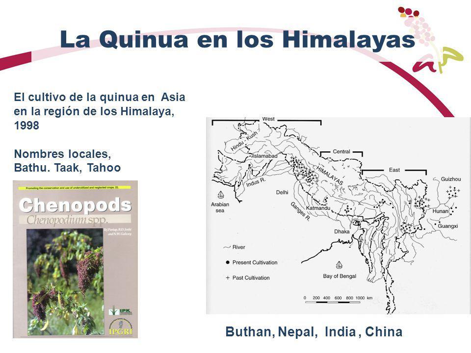 La Quinua en los Himalayas
