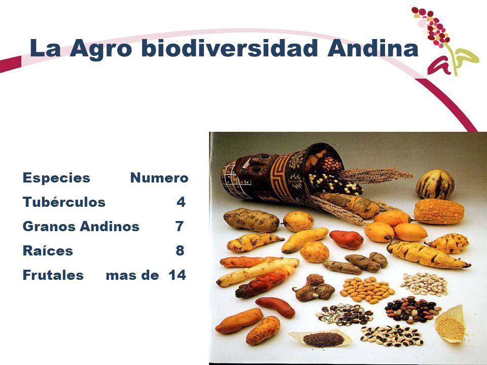 La Agro biodiversidad Andina
