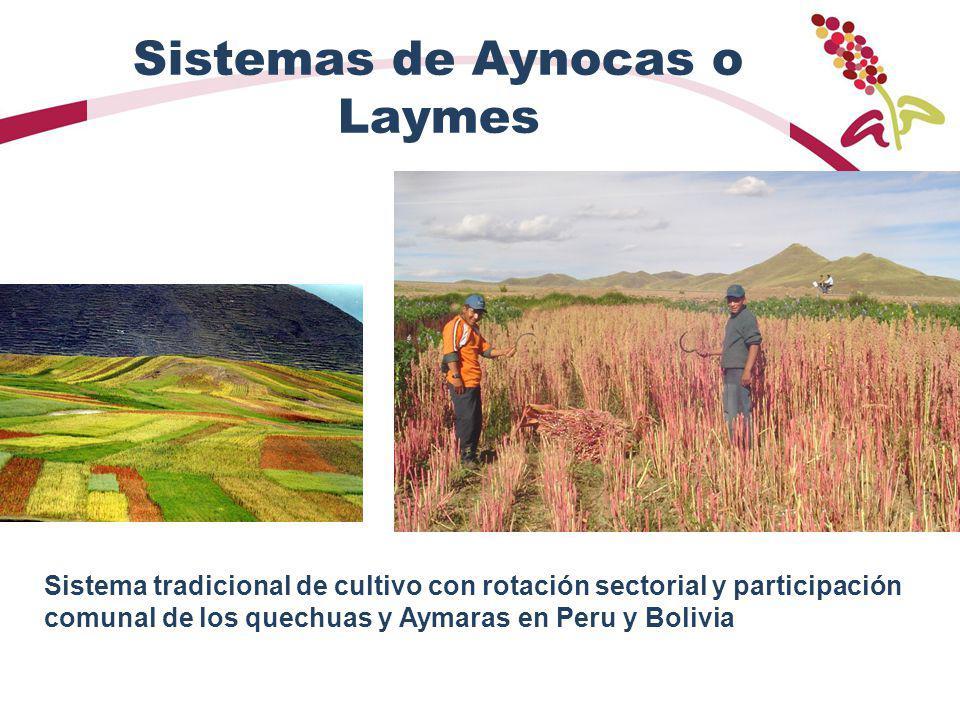 Sistemas de Aynocas o Laymes