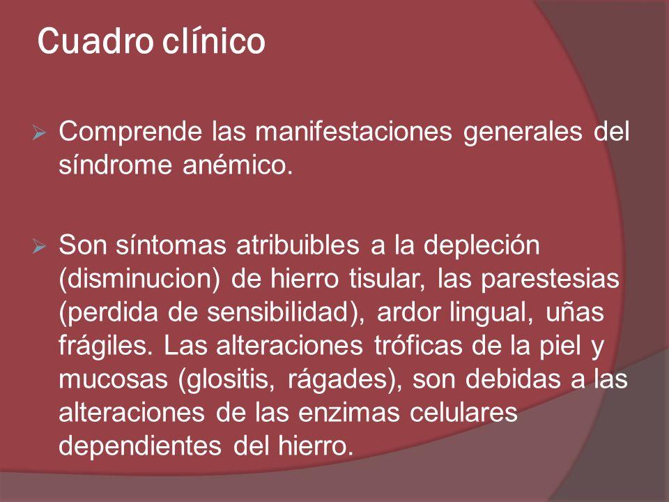 Cuadro clínico Comprende las manifestaciones generales del síndrome anémico.