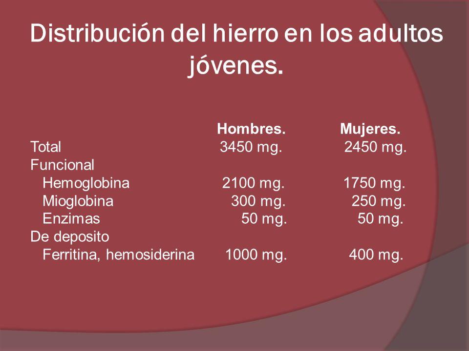 Distribución del hierro en los adultos jóvenes.