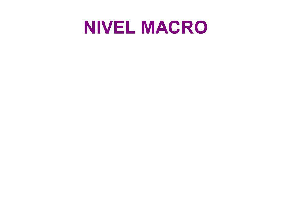 NIVEL MACRO