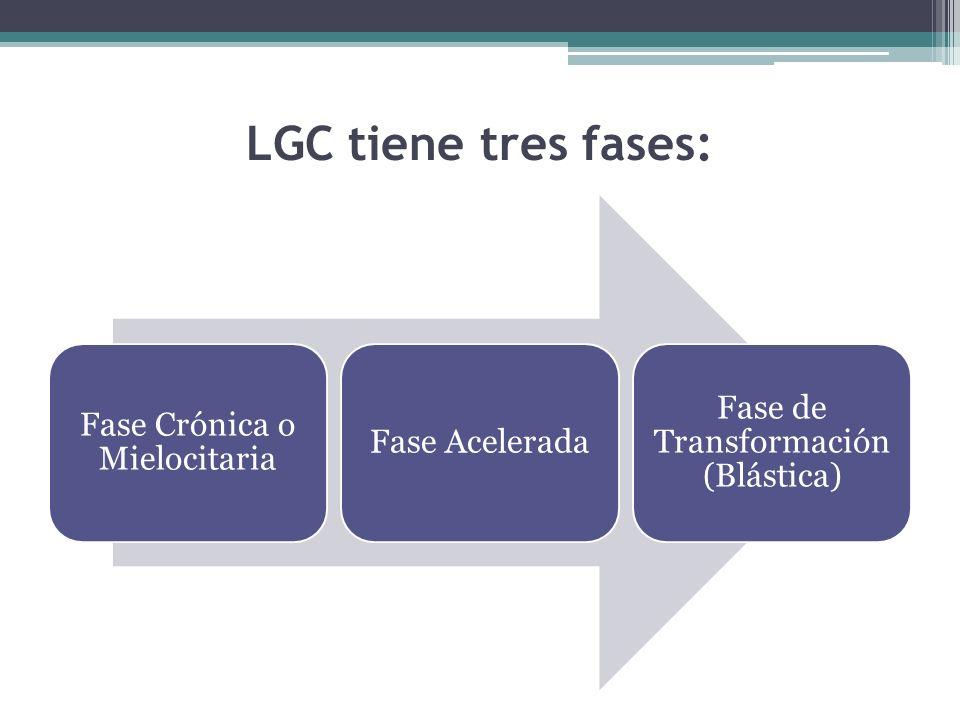 LGC tiene tres fases: Fase Crónica o Mielocitaria Fase Acelerada