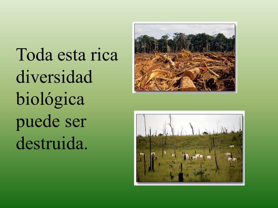 Toda esta rica diversidad biológica puede ser destruida.