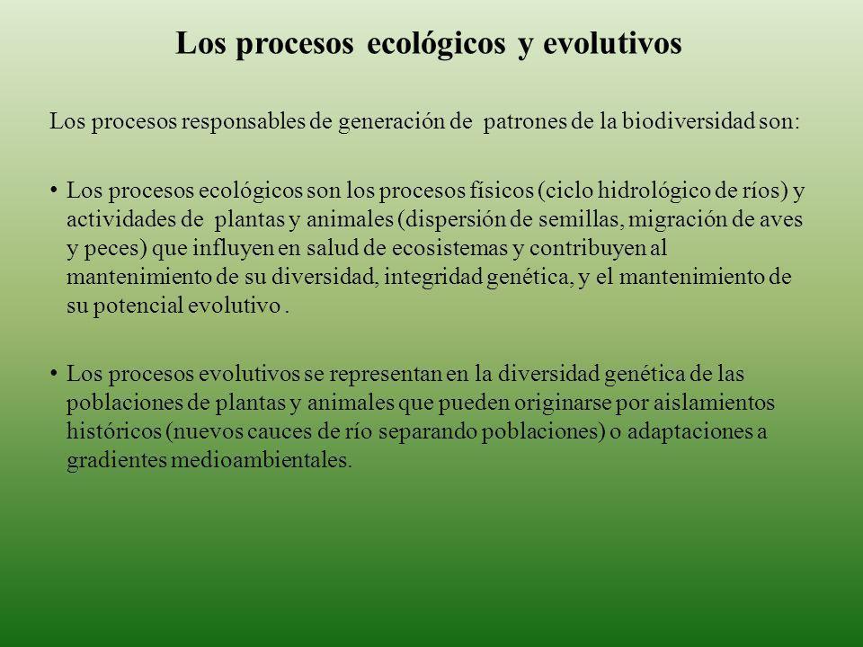 Los procesos ecológicos y evolutivos
