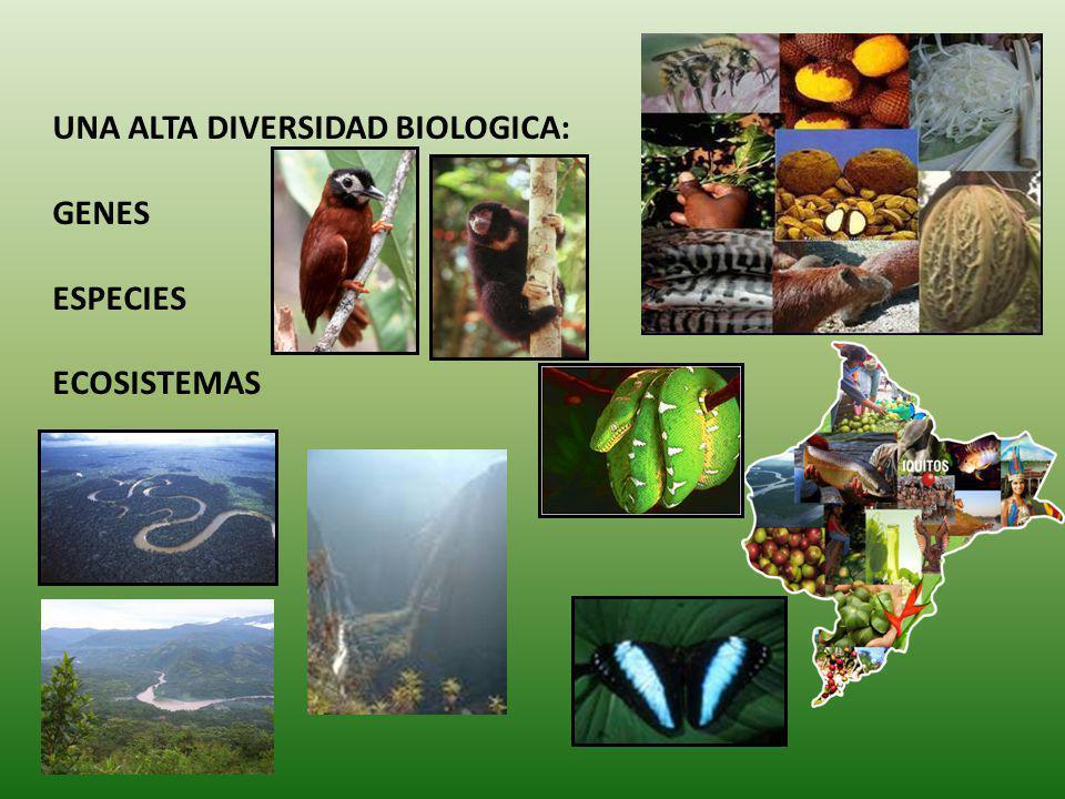 UNA ALTA DIVERSIDAD BIOLOGICA: