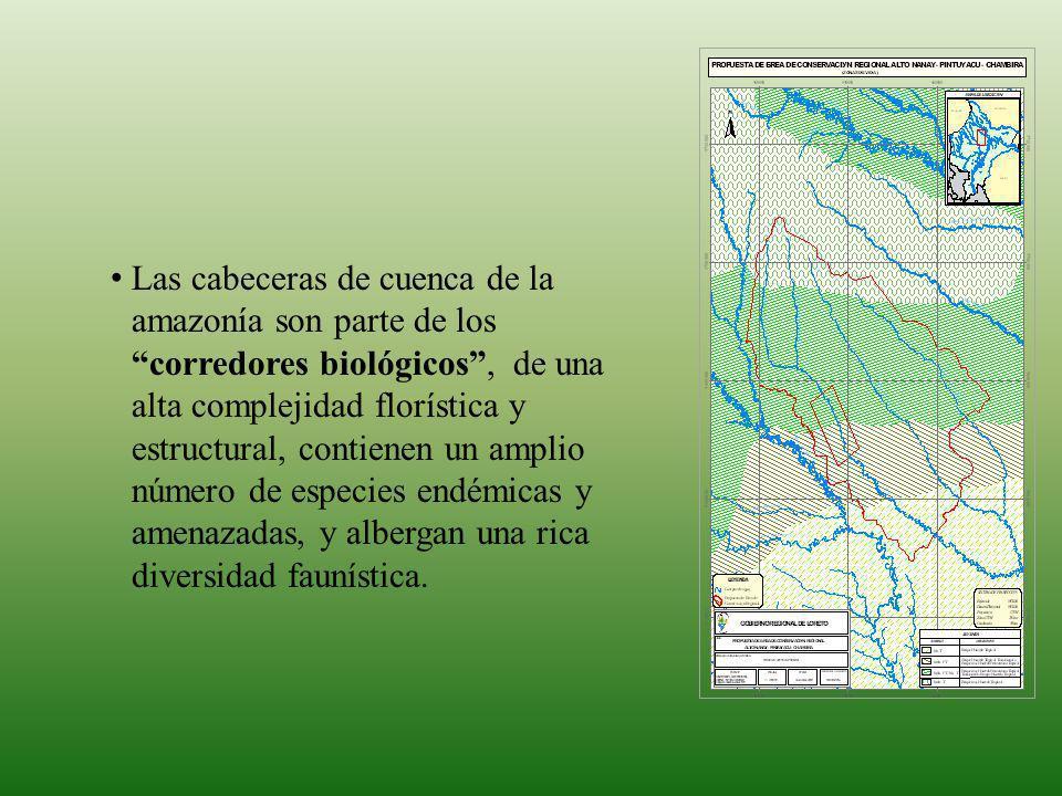 Las cabeceras de cuenca de la amazonía son parte de los corredores biológicos , de una alta complejidad florística y estructural, contienen un amplio número de especies endémicas y amenazadas, y albergan una rica diversidad faunística.