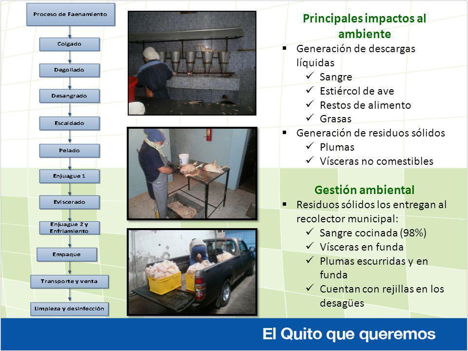 Principales impactos al ambiente